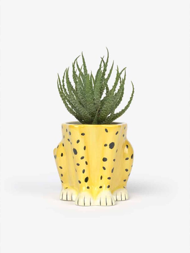 Urban jungle Cheetah Plant Pot – DOIY